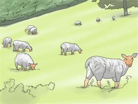 how to your to herd how to teach your to herd 6 steps with pictures wikihow