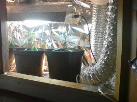How To Run Co2 In Grow Room by Small Grow Room 250w Hps With Pix