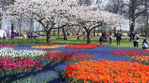 flowers spring flowers park trees tulips people desktop