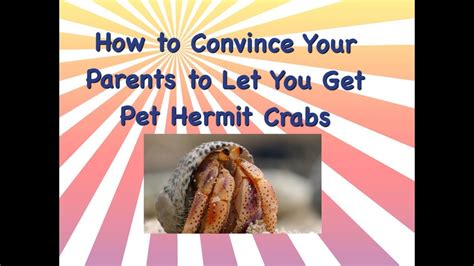 how to convince your parents to let you get pet hermit
