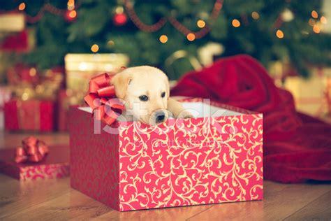puppy present puppy presents decore