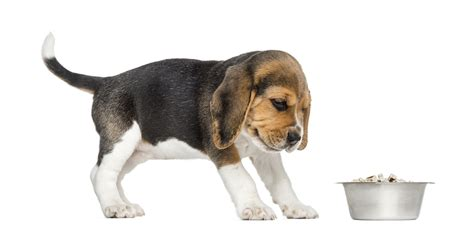 where do dogs like to be pet what to do if your does not like their food