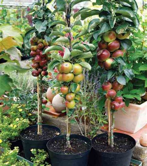 fruit tree nursery houston guide to homesteading homesteading and livestock