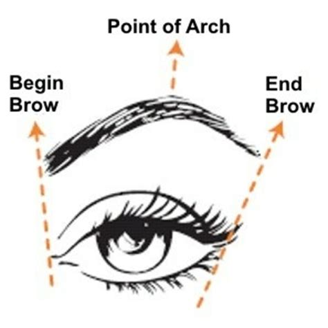 how to get a perfect arch for your eyebrows 14 steps steps to get the perfect eyebrow fashion nigeria