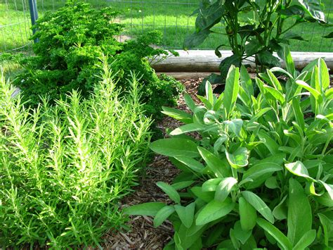culinary herb gardens   create  edible herb garden