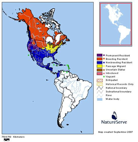 duck migration map northern pintail flyways us