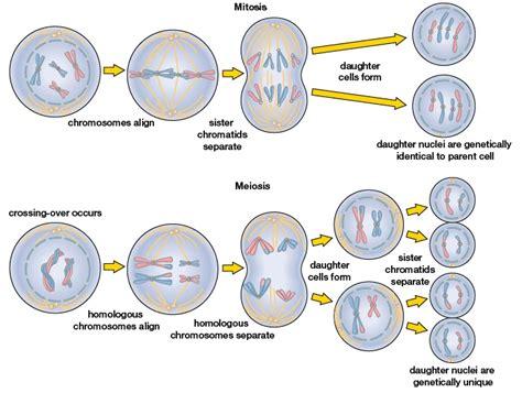 test zanichelli zanichelli test biologia 28 images unitutor chimica