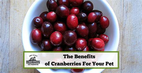 can dogs eat cranberries can pets eat cranberries redbarn pet products