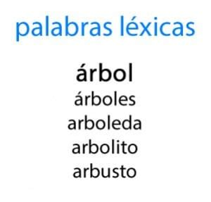 librero familia de palabras palabras l 233 xicas