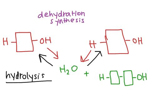dehydration synthesis biology chapter 5 dehydration synthesis science showme
