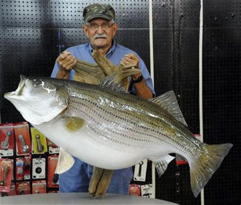 Alabama Records Alabama Angler S Igfa World Record Striped Bass Available For Viewing Joe S