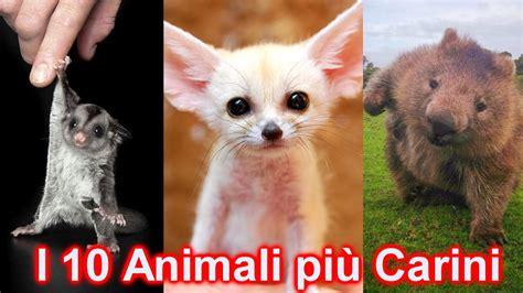 animali da casa 10 strani animali domestici dolci e coccolosi