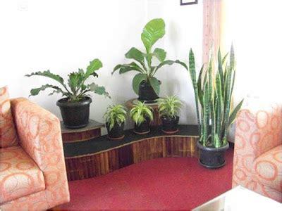 Pot Tanaman Hias Ukuran 30cm pemeliharaan tanaman hias pot 5 info petani