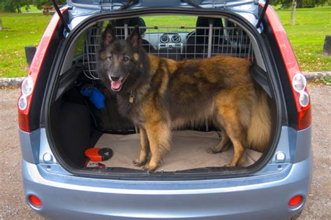 car dogs pet safety in your car