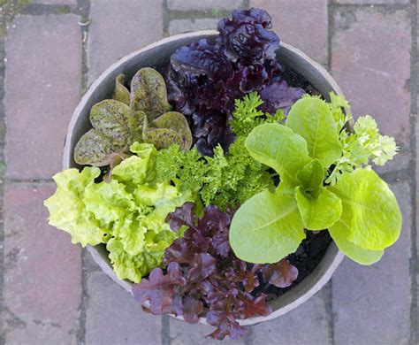 container garden lettuce simple steps to create a kitchen container garden make
