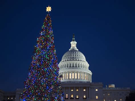 christmas tree lights up the night at u s capitol today com