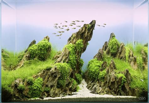 aquascape inspiration inspirational aquascape 8 apsa