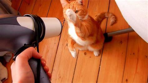 Hair Dryer Murah Untuk Kucing anak kucing dibersih dengan pengering rambut