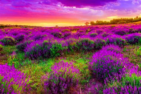 Beautiful Spring by Spring Wallpapers Hd Free Download 60 Pixelstalk Net