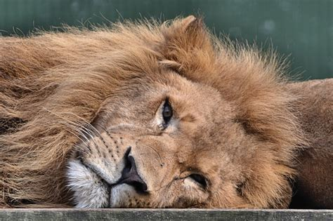 the deep south ruud leeuw stichting leeuw in anna paulowna diruam producties