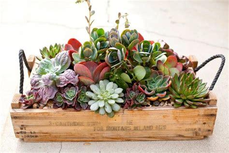 simply succulent plant designs los angeles orange county gardening pinterest