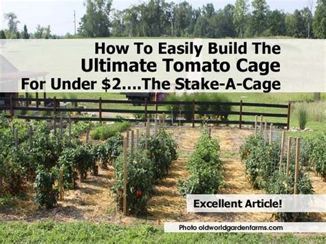 build tomato cage how to easily build the ultimate tomato cage for 2