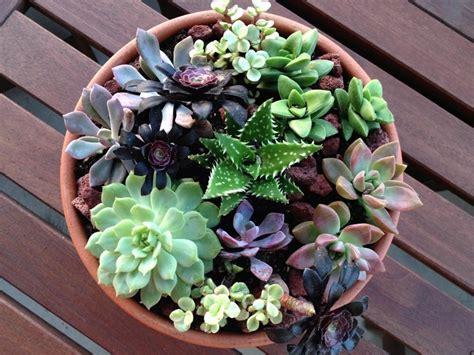diy succulents diy succulent garden diy succulent garden cotcozy