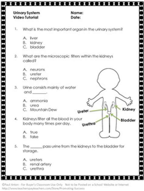 grade 5 human worksheets urinary system worksheet photos getadating
