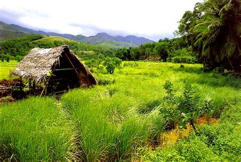 Coconut Island Nostalgic beautiful paradise sri lanka