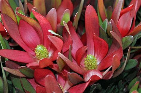 image gallery safari flowers