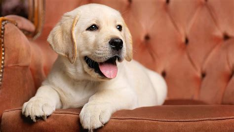 puppy tips for the week 9 week puppy schedules and what to expect