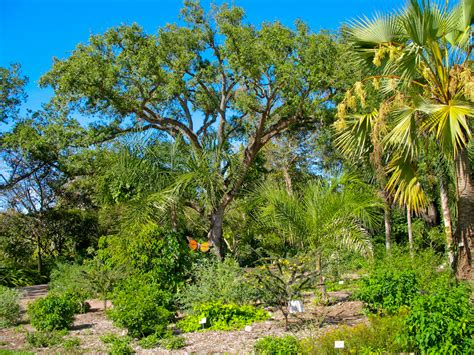 Fairchild Tropical Gardens by Fairchild Tropical Botanic Garden Florida Hikes