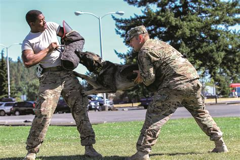 army handler k9 goes through his paces veteran voice veterans voice