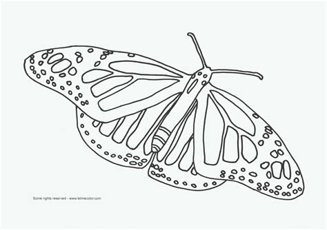 coloring page butterfly net african animals coloring pages coloring page for kids