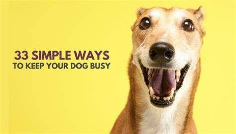 how to keep a puppy busy 33 simple ways to keep your busy indoors puppy leaks