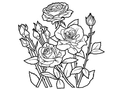 coloring pages of roses roses coloring pages bestofcoloring