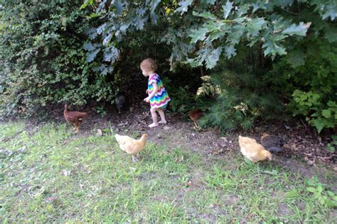 can you chickens in your backyard 6 reasons to keep backyard chickens and 1 reason not to