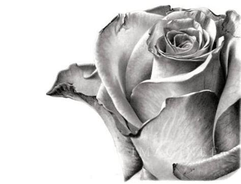 imagenes de rosas en 3d a lapiz dibujos a l 225 piz