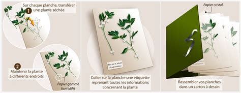 Faire Un Herbier Jardinage