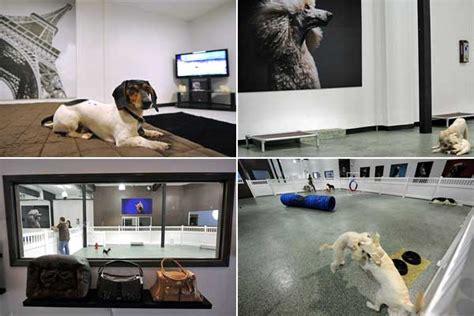 layout de hotel para cachorro g1 gt mundo not 205 cias hotel de luxo para c 227 es oferece
