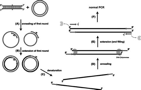 Concentration Card Template by Plasmid Pcr Template Concentration Pcr Component