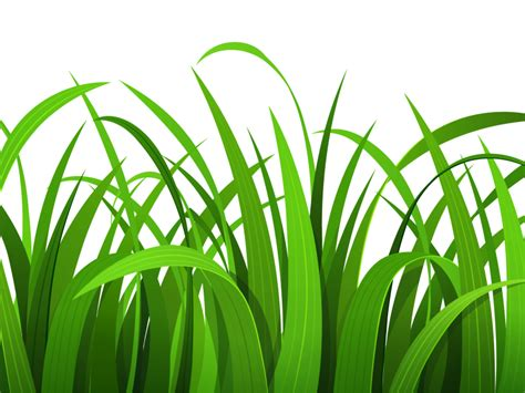 grass clipart free grass clip border clipart panda free clipart images