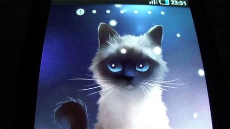 siamese cat  wallpaper youtube