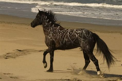google images horses painted horses google search horses pinterest