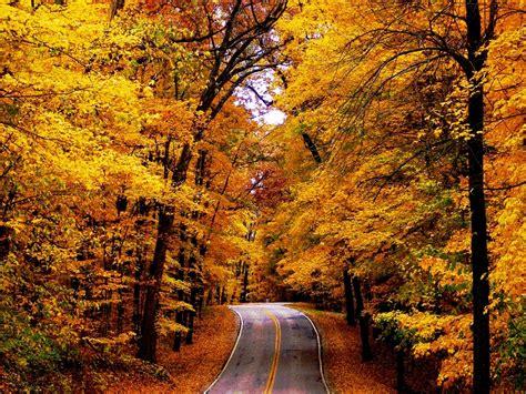 fall autumn the road autumn wallpaper 16517219 fanpop