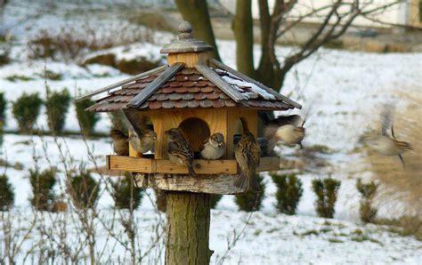selbst verputzen leicht gemacht vogelhausbau leicht gemacht selbst de