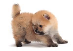 Small House Dogs Pics Photos Top Small Dog Breeds List New Dog Pet