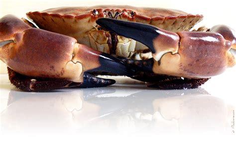 dormeur crabe crabe dormeur tourteau
