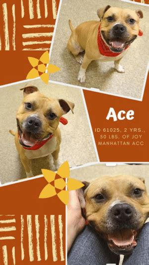 ace id   yrs  lbs  joy manhattan acc
