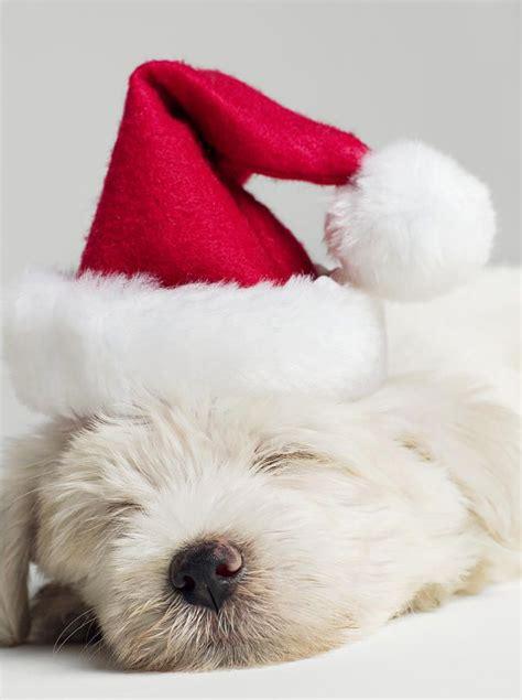 121 best sleeping animals babies images on pinterest